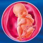 Размеры плода: данные фетометрии в различных сроках беременности